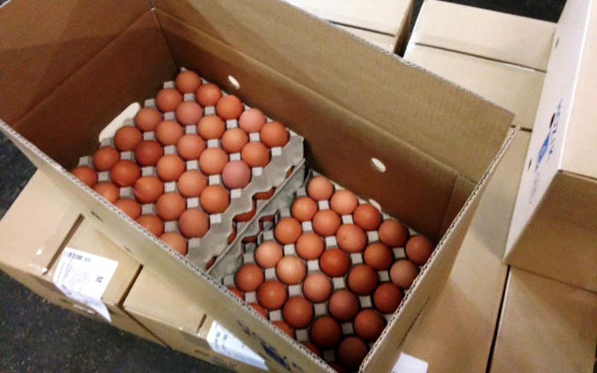 تخم مرغ گران تر از تخم طلا شد | تخم مرغ شانه ای چقدر شد؟